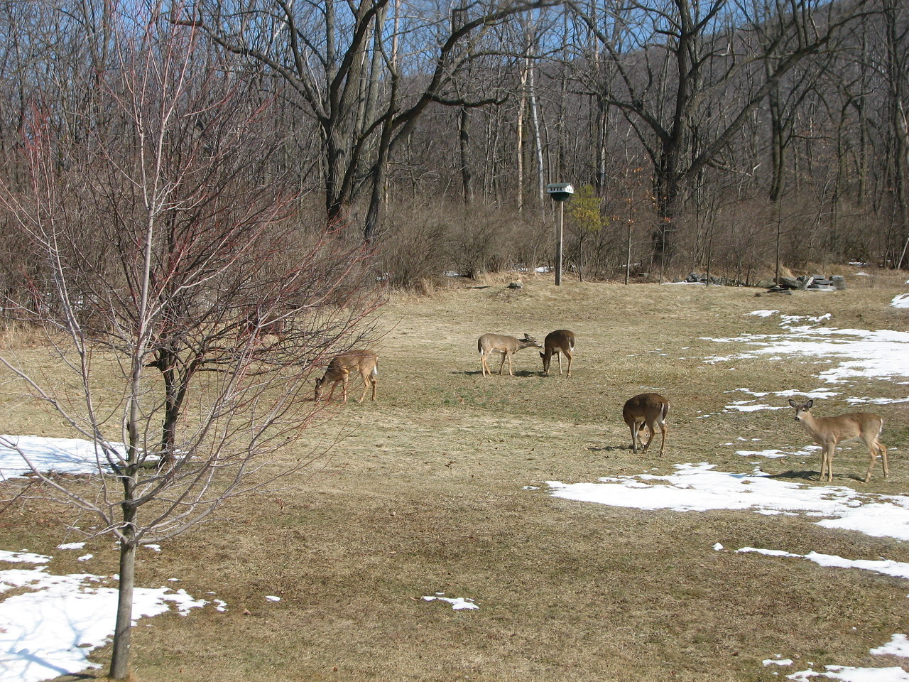 After the thaw, the usual crowd comes out