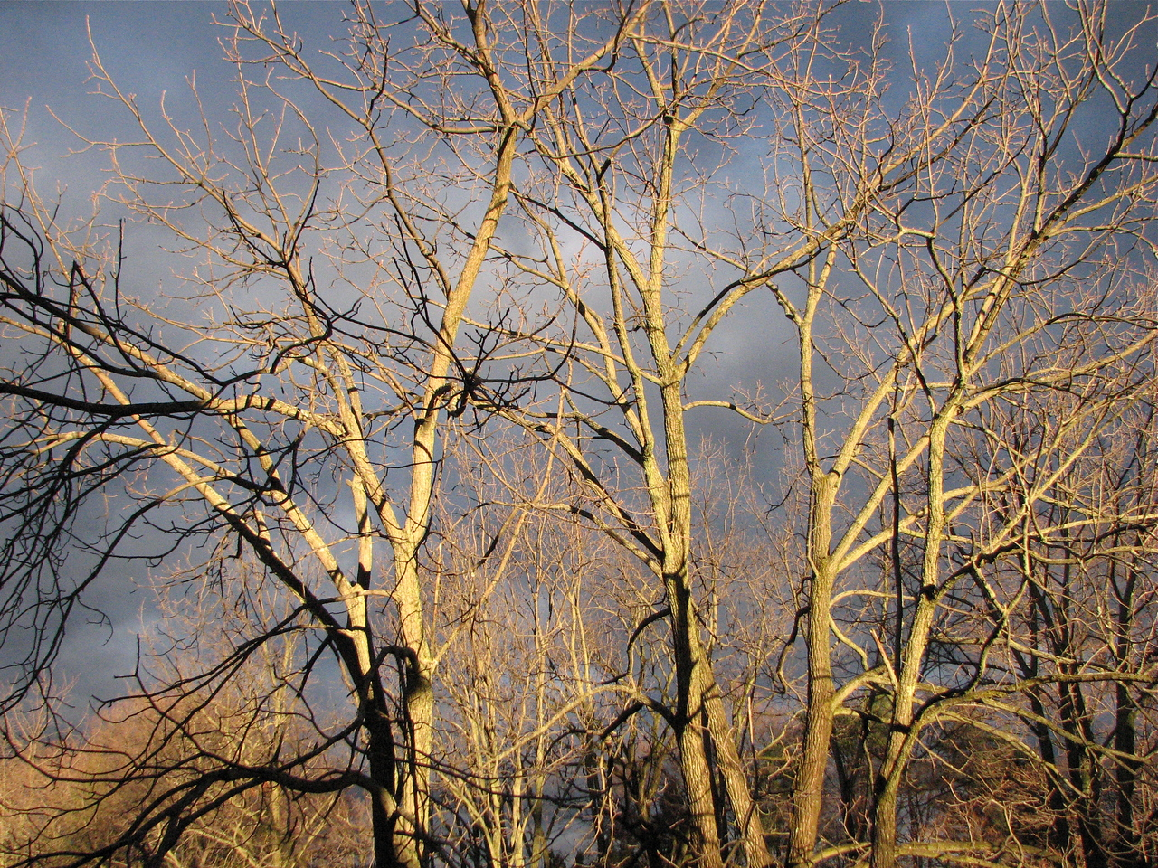 Walnuts lit by late day sun with stormy December sky in background