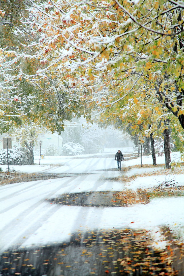 Our street in an October snowstorm