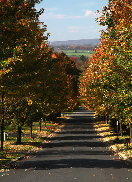 Looking down our street in October.  These maples will in a few years grow together over the road to form a tunnel.