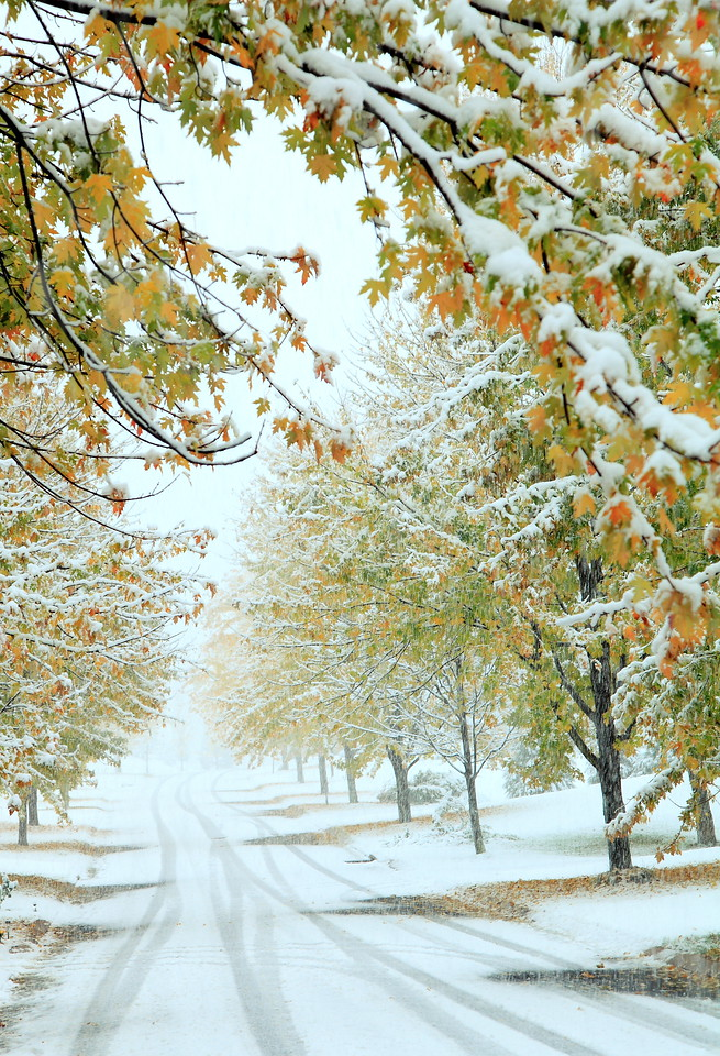 Looking up our street in an October snowstorm, 2011