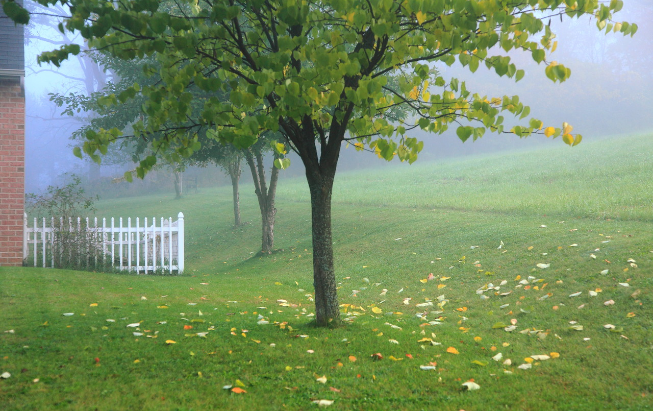 Edge of our yard on a foggy morning in early fall.  The redbud is just starting to drop leaves.