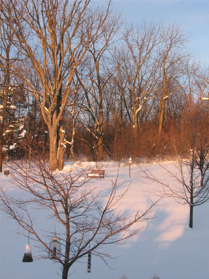 My trees in winter.  Cherry, red maple, apple, oak, walnuts.