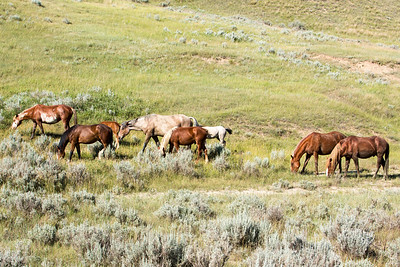 Wild Horses viewed from the Scenic Loop Drive.