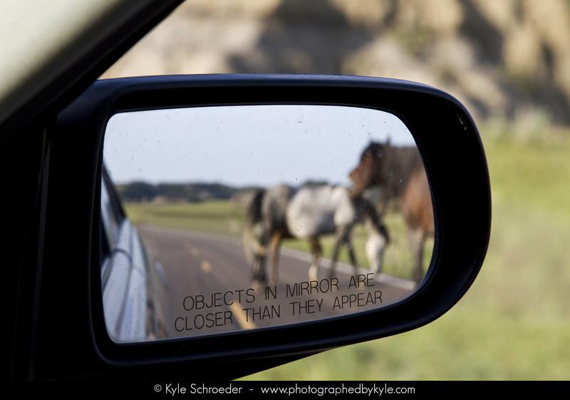 Feral Horses<br /> South Unit