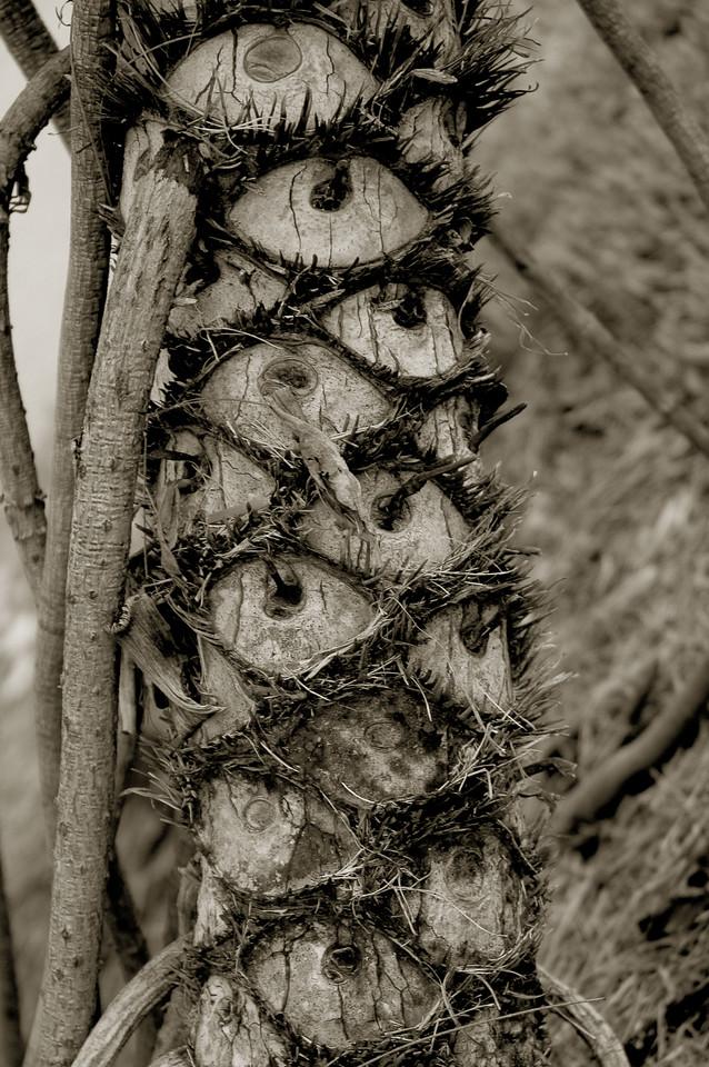 Eyes of Palm