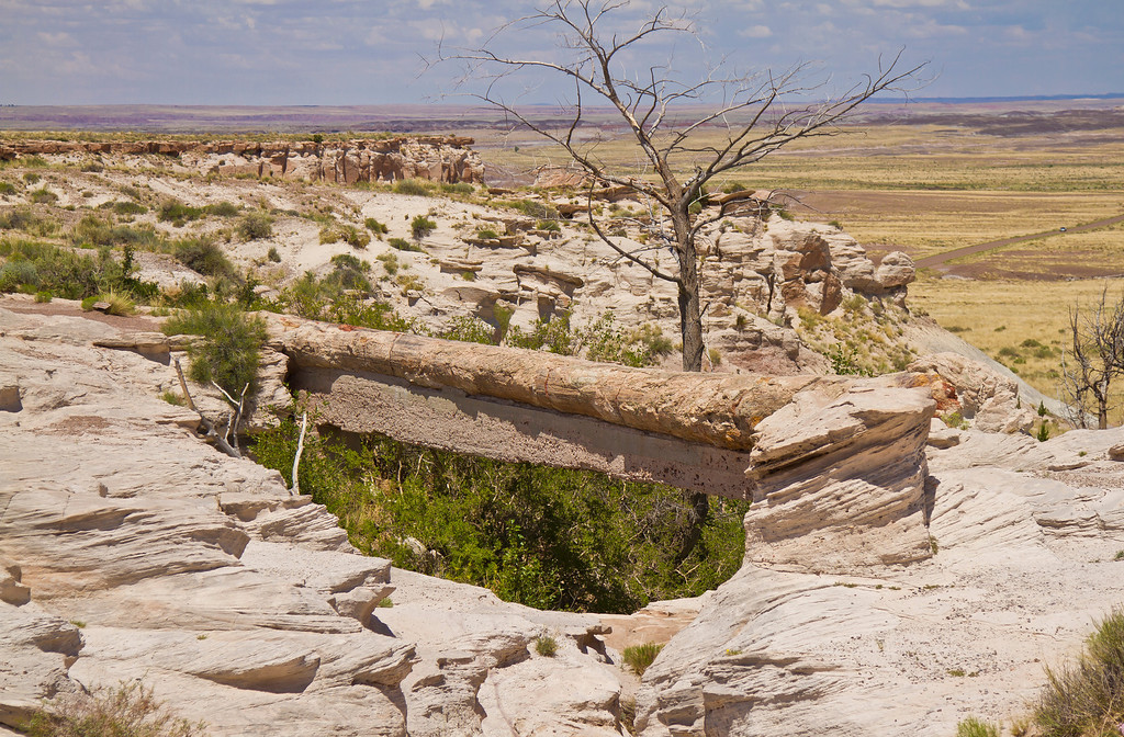 This is a petrified tree that has fallen over a gap in the rocks.  Petrified Forest National Park, AZ