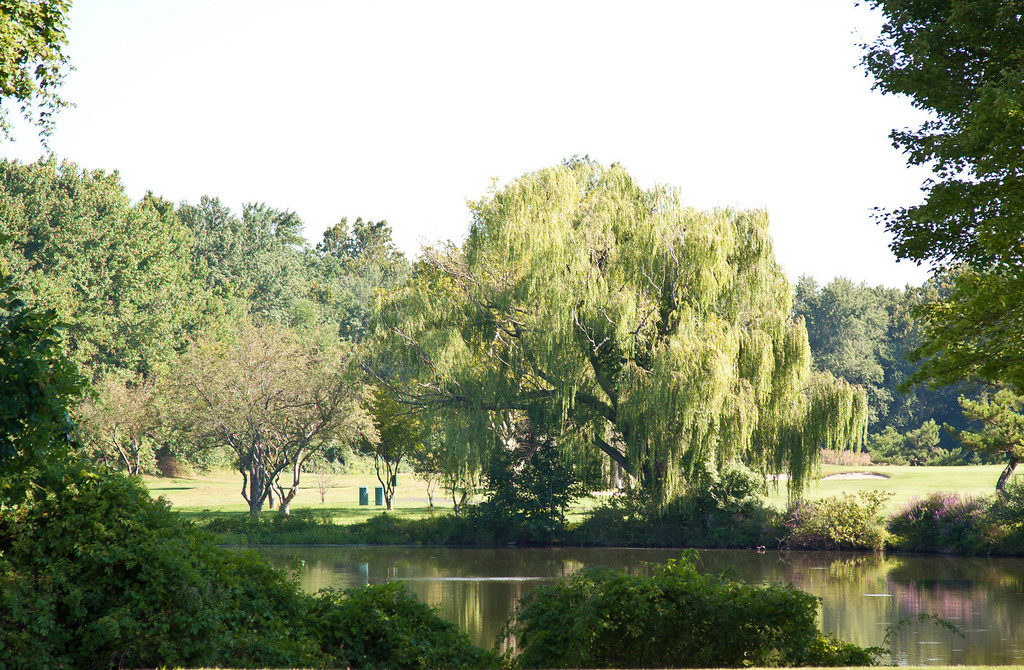 I've said it before, I love weeping willows, Teaneck, NJ
