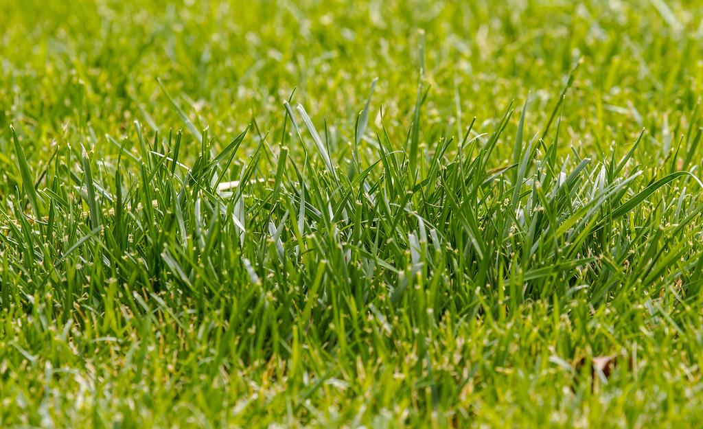 Grass...a 420 friendly photo.  Las Vegas, NV