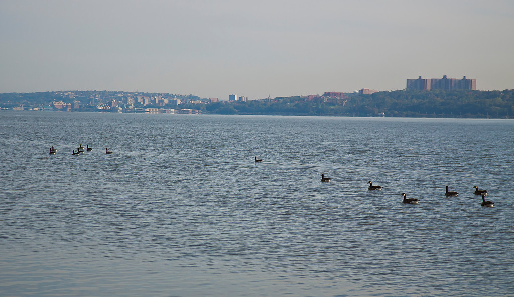 Geese headed up river...hey you're supposed to be going south!!  Englewood Cliffs, NJ