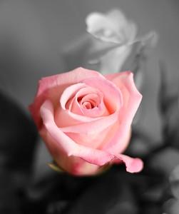 Rose, WA