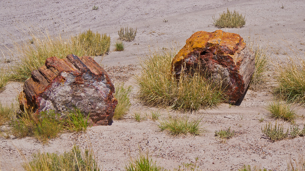 Back in their day as wood these must have been big trees.  Now they are agate.  Petrified Forest National Park, AZ