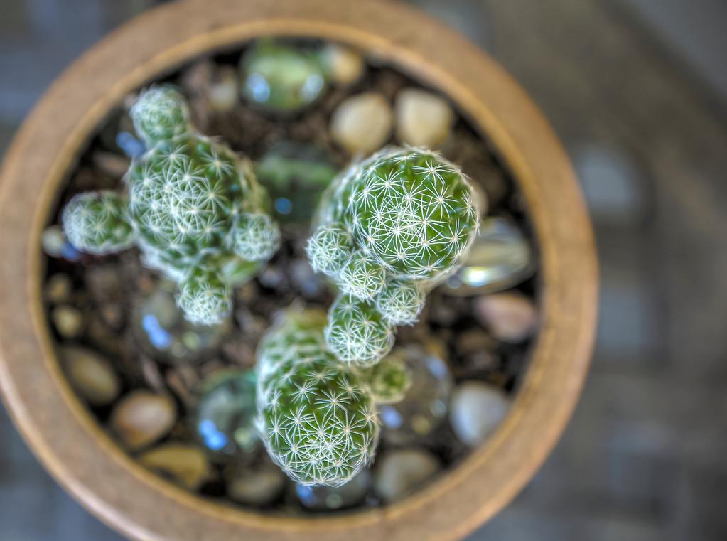 Small cactus.  Las Vegas, NV