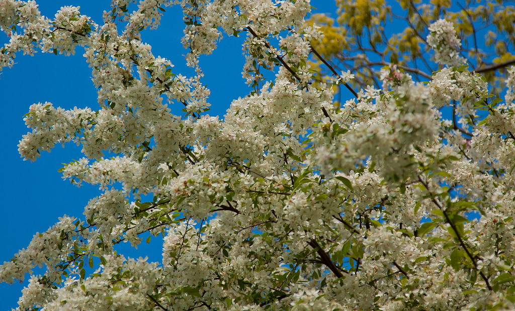 More blossoms at NJ Botanical Garden, NJ