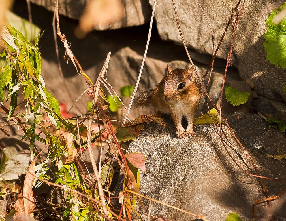 My little furry friend, I call him Stan, Englewood Cliffs, NJ
