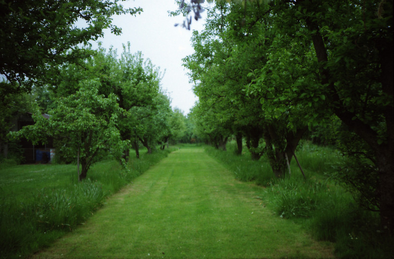 """My grandparents' orchard in the 1980s, looking down towards 'the wilderness'.  A place of innocent day dreaming and carefree adventure, """"hidden away"""" in south west London. Eagle eyed family members might realise it has been scanned in reverse (apologies)<br /> [ 35mm negative scanned on a modern MFP ]"""
