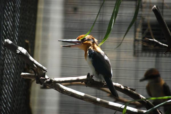 Extinct bird in the wild.