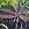 Starfish Roots