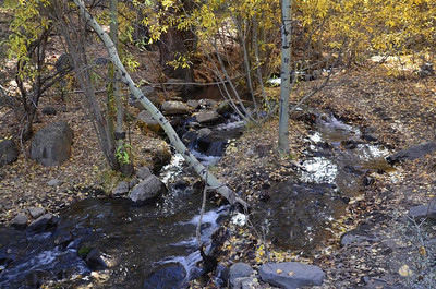 Thomas Creek - October 25, 2013
