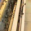 Hive #1 Box E ( second from top):  D1, D8, F2, F4, F6, F8, D3, C8.