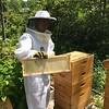 Hive #1 Box F ( top ):  F1, D2, F3, D4, F5, D6, F7, D7