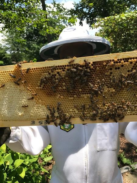 Hive#1 Box E (third from top ): C1, M3, M5, E5, C2, E6, C7, 6