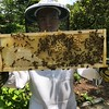 Hive#1 Box E (third from top ): C1, M3, M5, E5, C2, E6, C7, 6