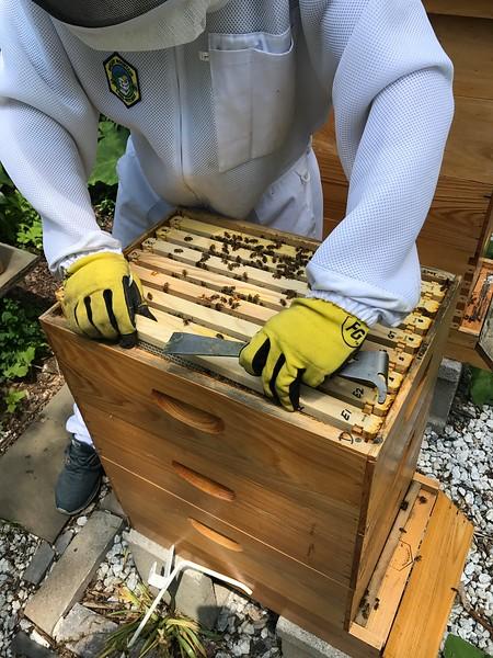 Hive #2 Box D Third from top:  E1, E2, G5, G6, G7, G8, E3, E4.