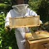 Hive #1 Box E ( second from top):  D1, D8, F2, F4, F6, F8, D3, C8.