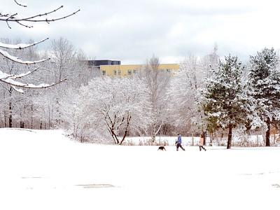 Walking The Dog In A Winter Wonderland