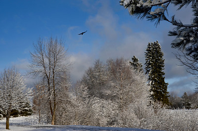 Winter Snow, Rictographs Images