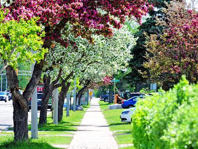 Spring 2019, Thunder Bay, Ontario, Canada