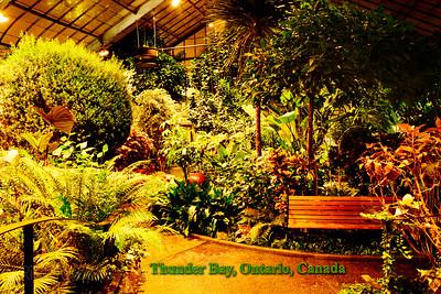 Plants Grow, Thunder Bay, Ontario, Canada