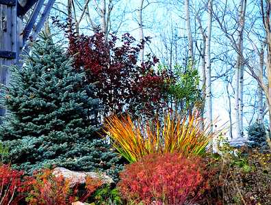 Some of The Fall Colors of the Hope & Memory Garden
