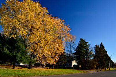 Autumn Cityscape, Rictographs Images