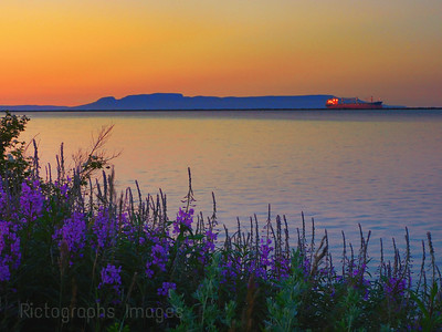 Fireweed Morning, Summer 2020