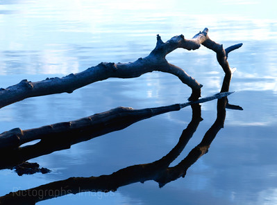 Logs Reflecting in the River.