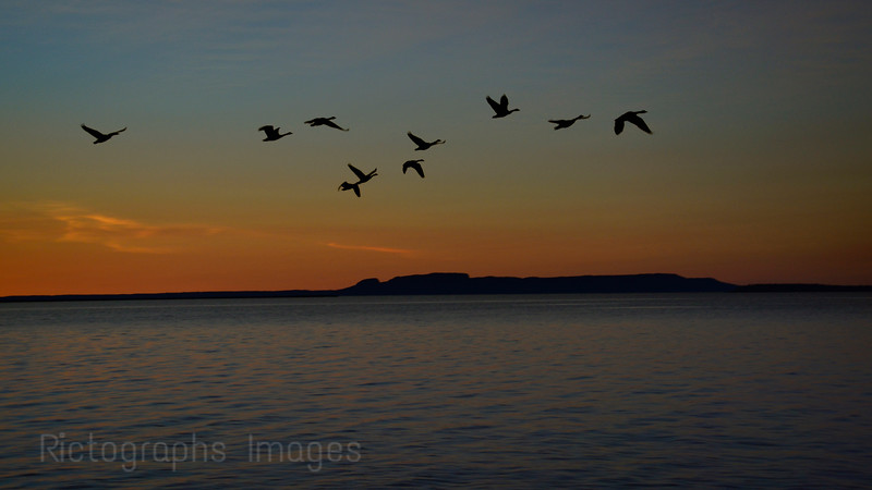 Canada Geese, Flying By The Sleeping Giant Early In The Morning