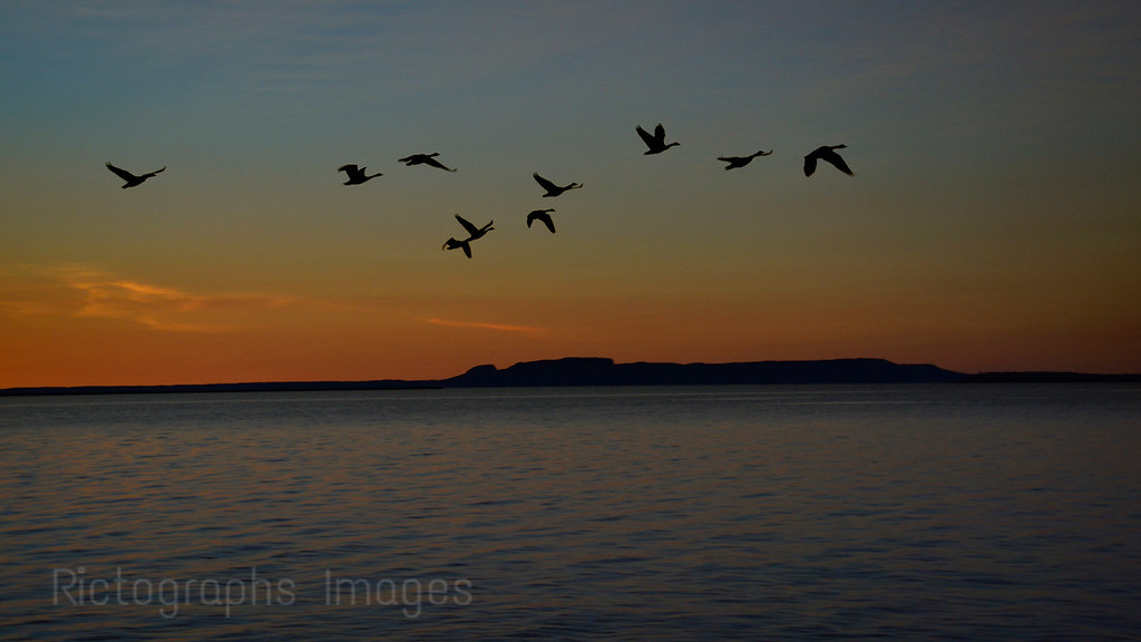 Canada Geese, Flying By The Sleeping Giant Early In The Morning, Summer 2016
