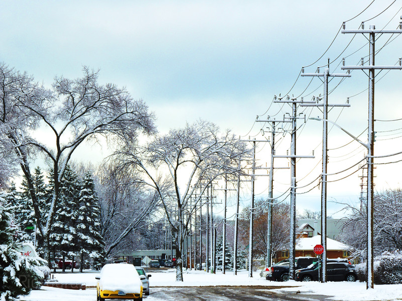 Winter Elm In The City, Rictographs Images