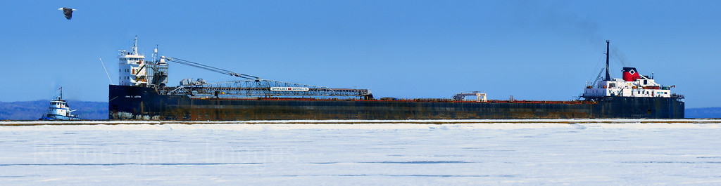 Eagle, Tug Boat, And Freighter Battle Winter Ice