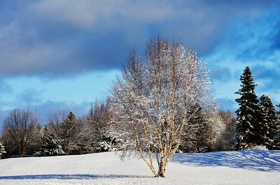 Winter Parkland