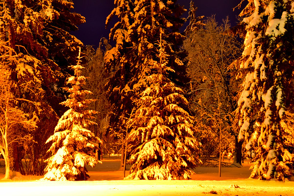 Vickers Park, Trees