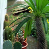I took this picture only because it shows the Madagascar Palm in focus.