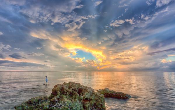 Egret Sunset II2013