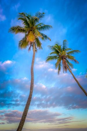 Sunrise Palm Vert 2016