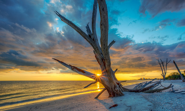 Lovers Key Sunset through Tree 2015