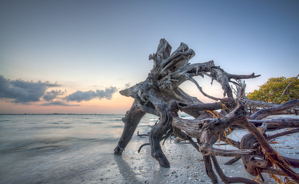 Tree Man Sunrise Sanibel Island
