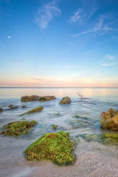 Sunrise Clam Pass Egret Vert 7-17