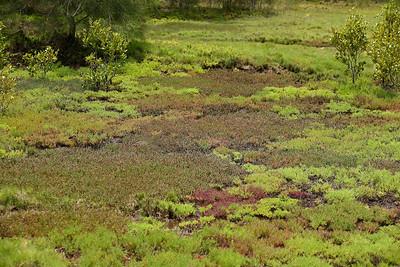 Tinchi Tamba Wetlands 6-12-8